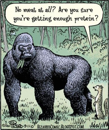 bizarro-gorilla-cartoon